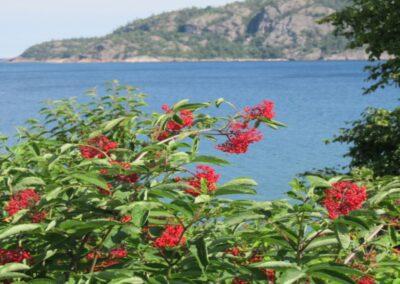 Algoma Bay, Ontario in Summer, R. Odell