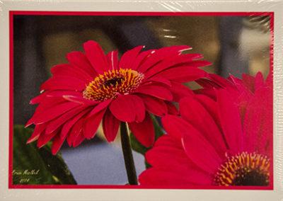 oha notecards, gerbera design
