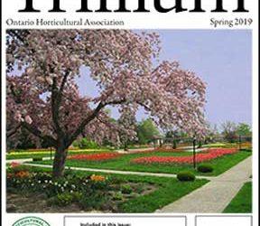 2019 Spring Trillium