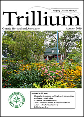 2019 Autumn Trillium