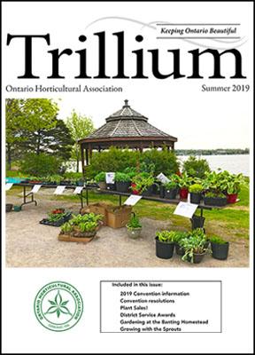 2019 Summer Trillium
