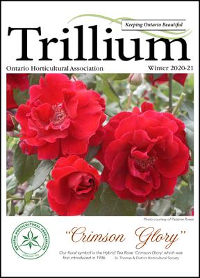 2020-21 Winter Trillium