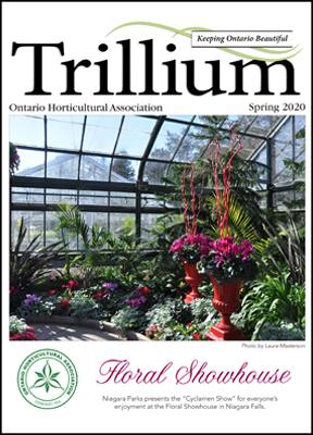 2020 Spring Trillium