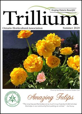 2020 Summer Trillium edition