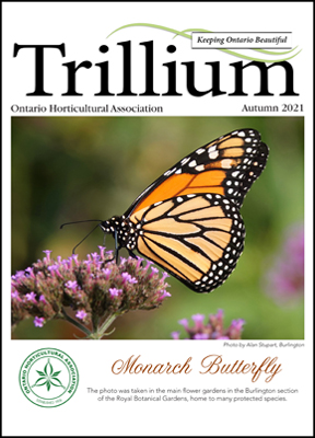 The Autumn edition of Trillium is here!