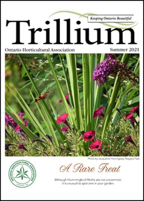 Summer Trillium 2021 Newsletter